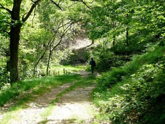 Michel Montecrossa & Mirapuri Nature 3
