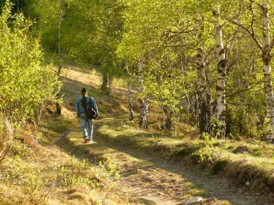 Michel Montecrossa & Mirapuri Nature 1