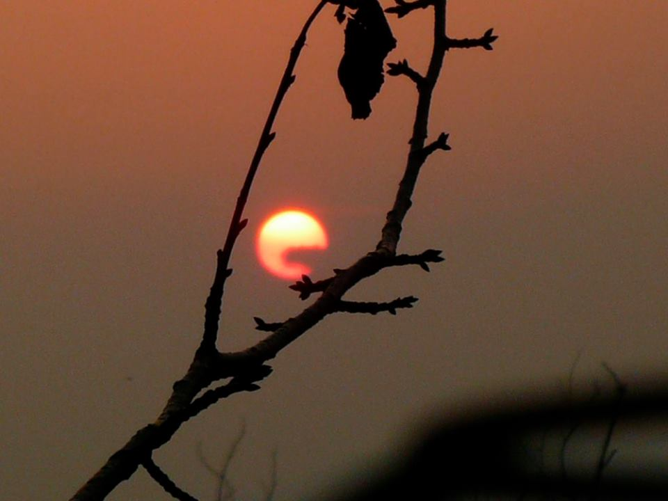 Description: Fine Art Nature Photography by Mirakali