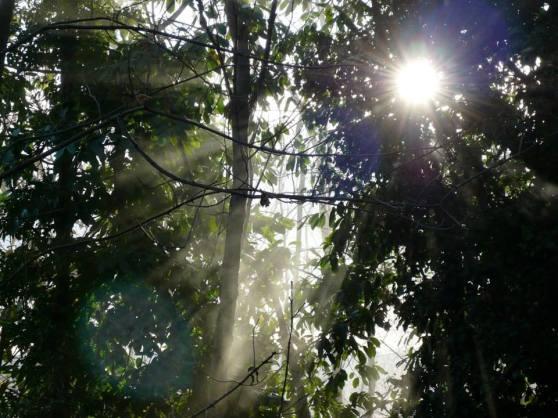 Sunlight - Photo by Mirakali